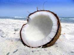fresh cracked coconut